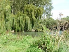 Duxford Ford and it's beautiful willow trees - England.